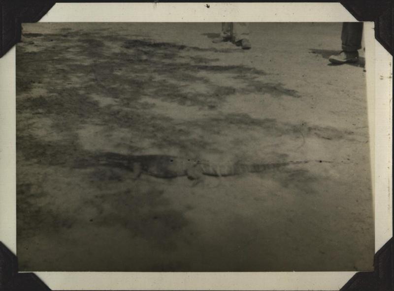 WWII PI Balawan croc