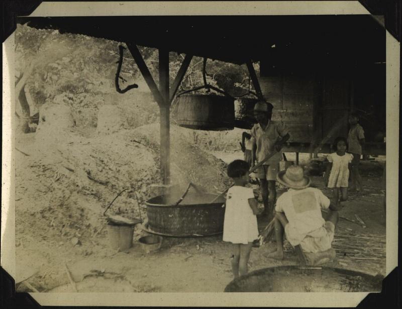 WWII PI sugarcane 3