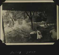 WWII PI sugarcane 4