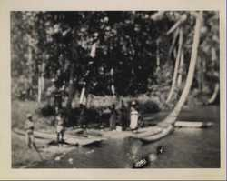 WWII people mangroves