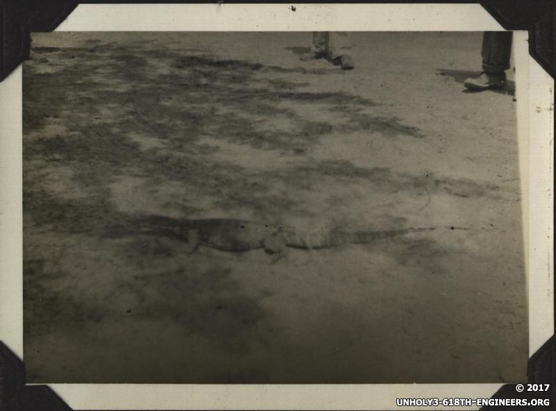 WWII PI Balawan reptile