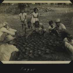 WWII PI sugarcane 5
